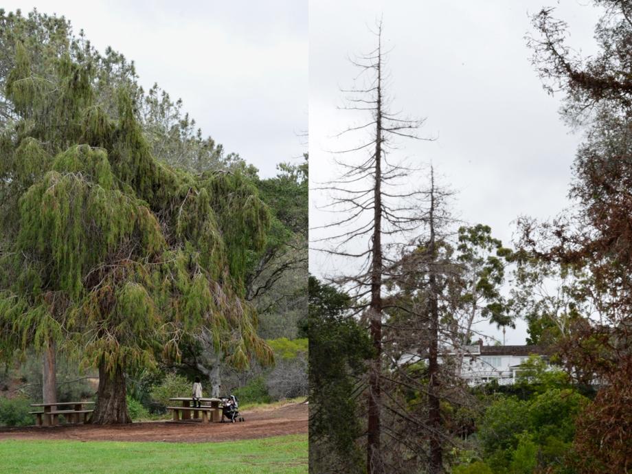 October-4-Presidio-1